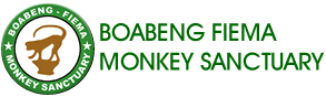 Boabeng Fiema Monkey Sanctuary
